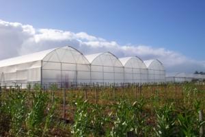 تولید و فروش نایلون کشاورزی و عریض